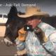 herd-leader-mule-training-steve-edwards