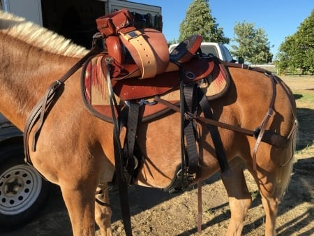Mule Saddle, Tack and Britchen