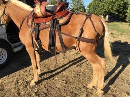 Mule Saddle, Britchen, Saddle Pad