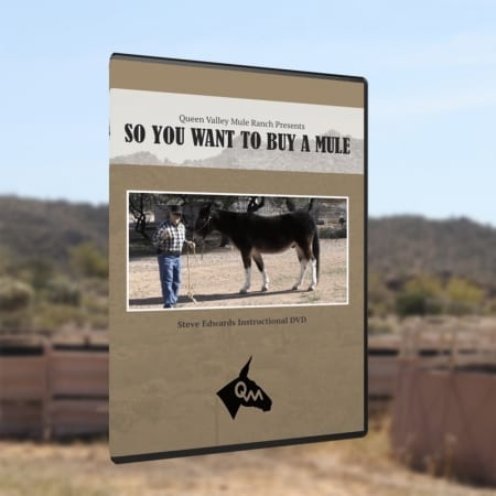 Video Cover for So You Want to Buy A Mule - Product Image