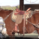 Featured Image for Trail Lite Mule Saddle Video Demo