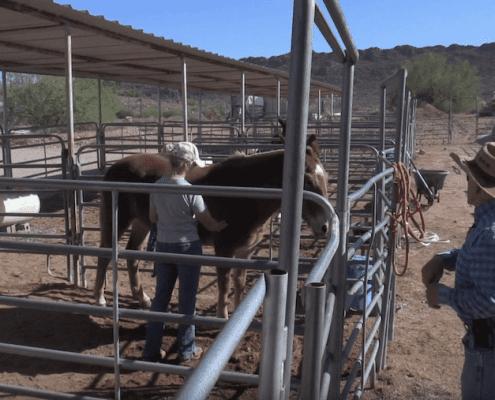 Steve Edwards training mule owners