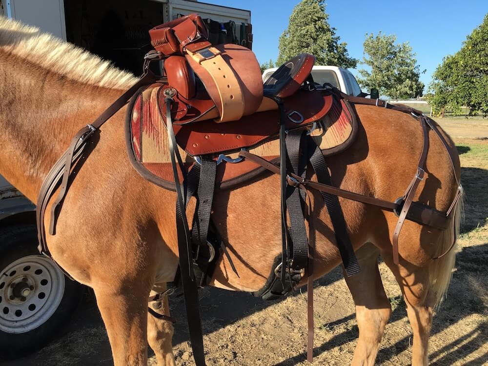 Picture of a mule with britchen placed for steep mountain riding.