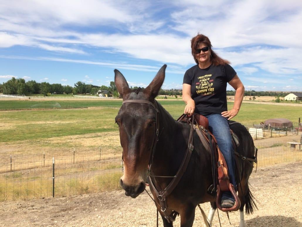Mule and rider on the ranch