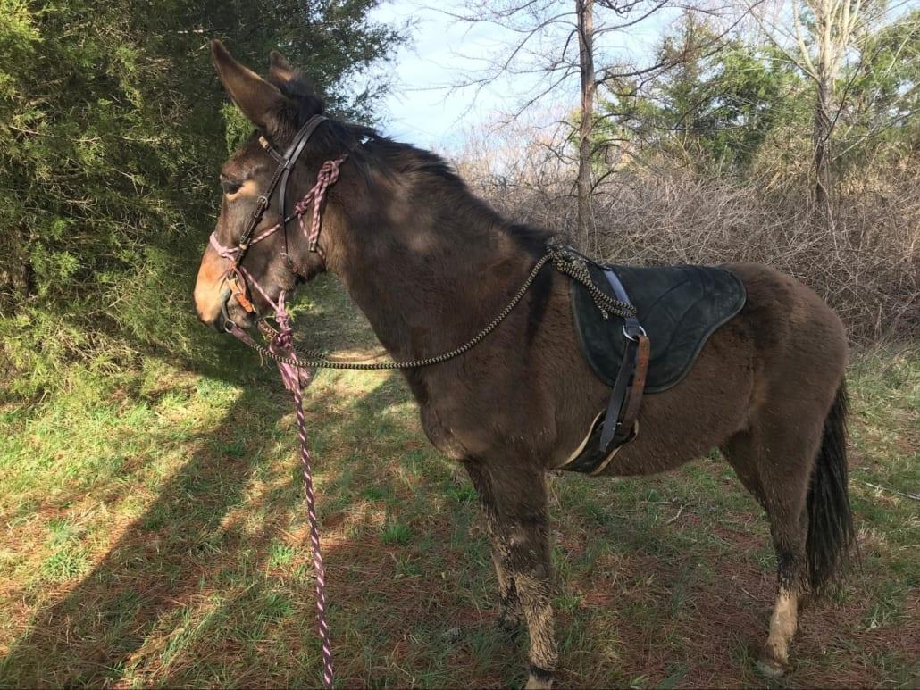 Scott's new mule Bunny