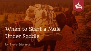 When to start a mule under saddle-Steve Edwards